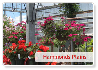 Hammonds greenhouse