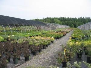 Springvale Conatiner Yard